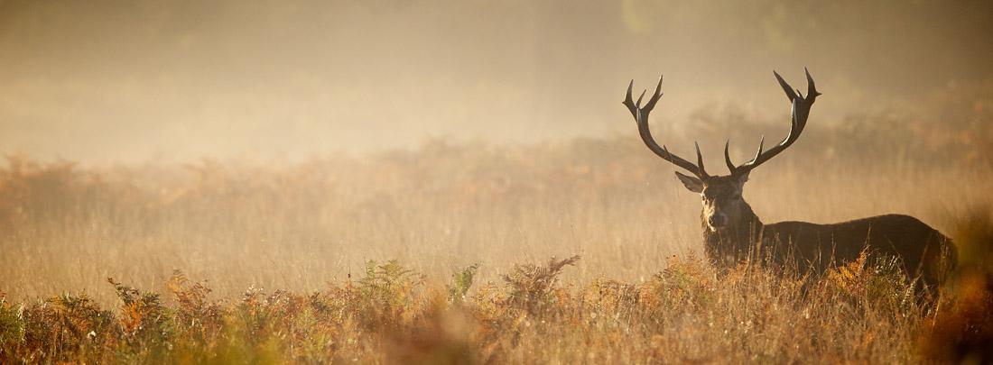 Hunting Texas