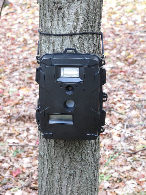Trail Camera for Deer Hunting: What You Should Know